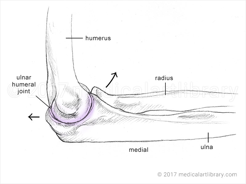 bones of the elbow humeroulnar joint