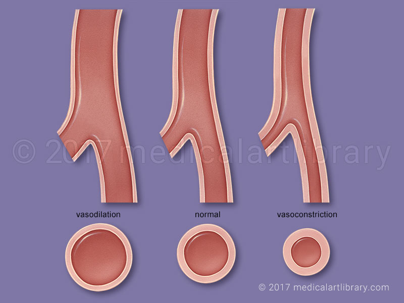 Systemic Vascular Resistance medical illustration