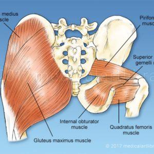 Hip Rotator